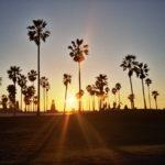 Silhouetted Venice Beach